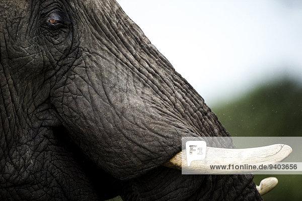 Elefant Elefant