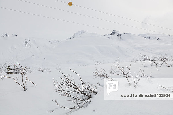 Alaska Beauty In Nature Chugach Mountains Cold Temperature day Frozen Horizon Over Land Horizontal Horizontal landscape mountain Nature nobody outdoors Physical Geography plant Power Line Scenics snow Thompson Pass tranquility USA winter
