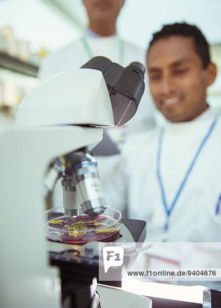Nahaufnahme der Probe unter dem Mikroskop im Labor