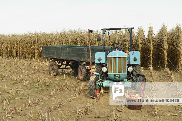 Kornfeld Traktor