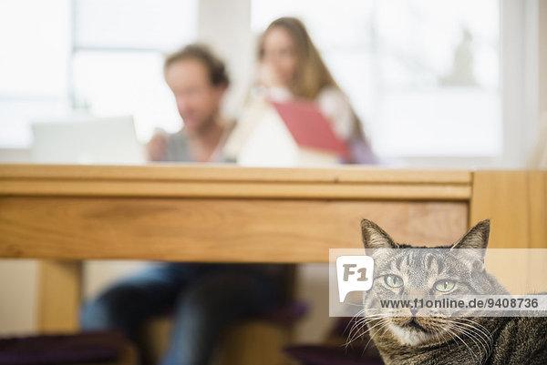 Interior zu Hause Hintergrund Katze