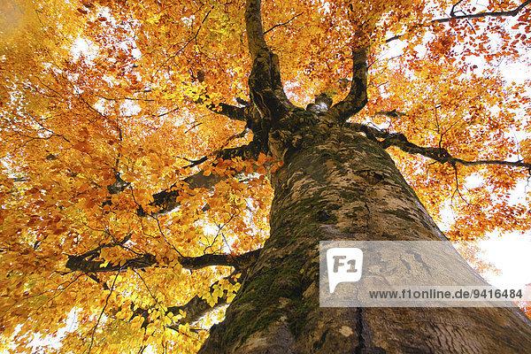 Herbst Japan