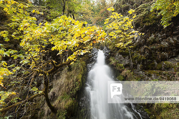 Wasserfall Fall Creek Falls  Roseburg  Südkaskaden  Kaskadengebirge  Washington  USA