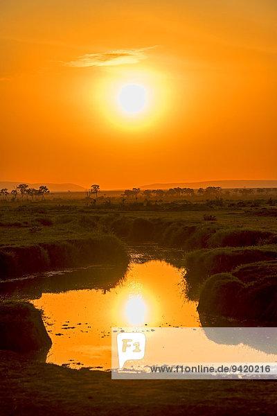 Sonnenaufgang mit Spiegelung in See  Masai Mara  Kenia