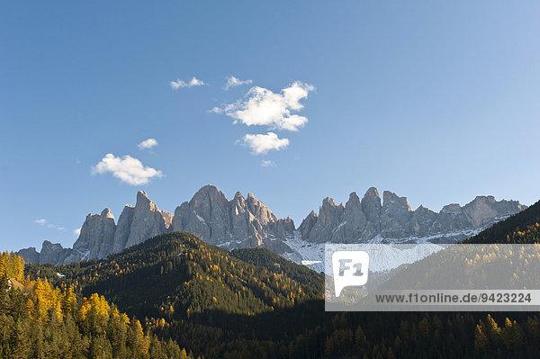 Bergwald im Herbst  Geisler Spitzen  Geislergruppe  Naturpark Puez-Geisler  Dolomiten  Alpen  Villnöß  Villnößtal  Südtirol  Trentino-Südtirol  Italien