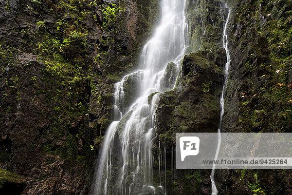 Wasserfall im Wald  Burgbachwasserfall  bei Schapbach  Schwarzwald  Baden-Württemberg  Deutschland