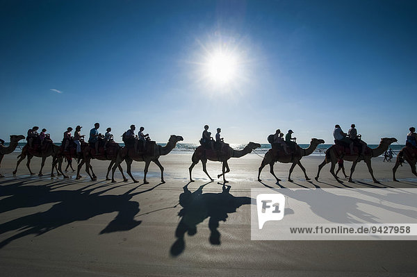 Tourists riding on camels on Cable Beach  Broome  Western Australia