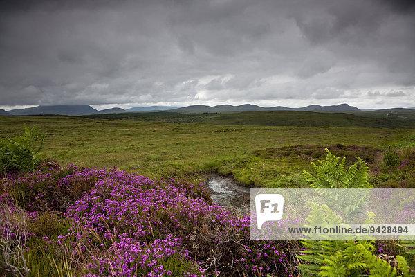 Moorlandschaft im Norden von Schottland  Großbritannien  Europa