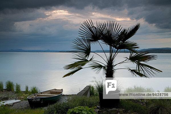 Palme mit Fischerboot und Regenwolken im Abendlicht am Bodensee  Reichenau  Baden-Württemberg  Deutschland  Europa