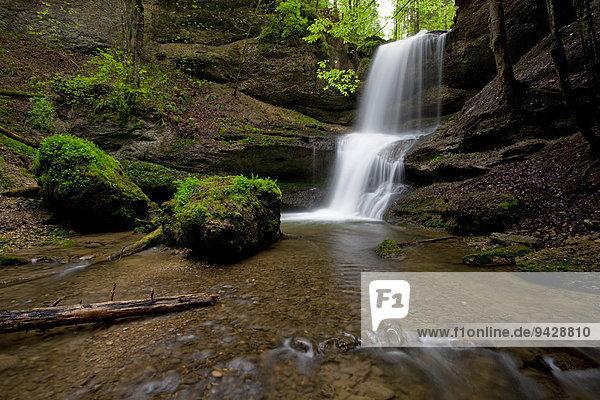 Hasenreuter Wasserfall  Scheidegg  Allgäu  Deutschland  Europa