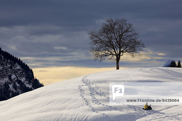 Fotograf im Schnee vor Baum im Alpstein  Winterlicht in den Schweizer Alpen  Schweiz  Europa