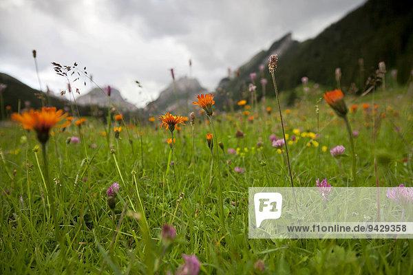 Frühlingswiese im Alpstein bei stärker Bewölkung  Schweiz  Europa