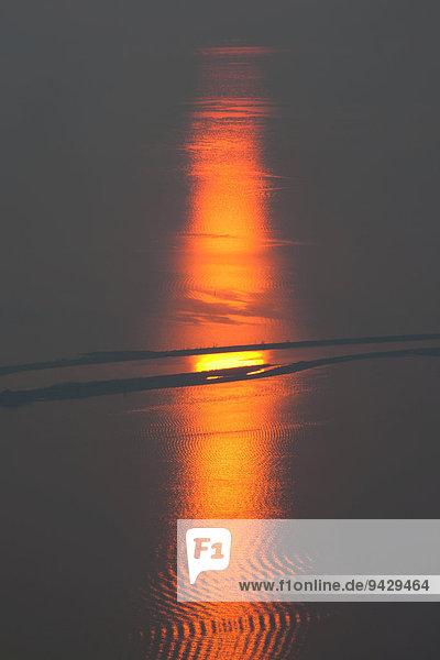 Sonnenuntergang am Rheindelta im Bodensee bei Bregenz  Österreich  Europa