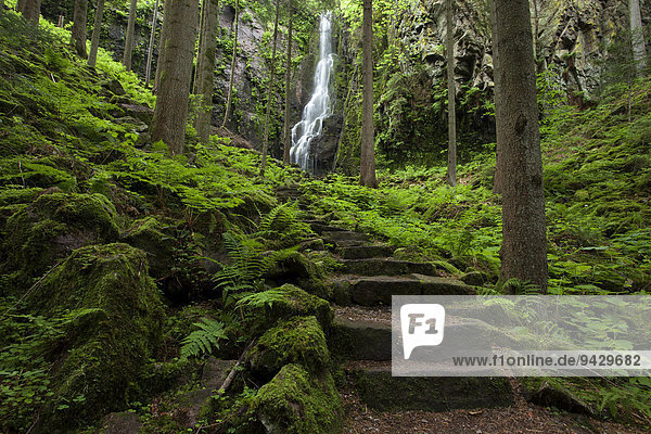 Burgbach Waterfall on a summer day near Schapbach in the northern Black Forest  Baden-Wuerttemberg  Germany  Europe  PublicGround