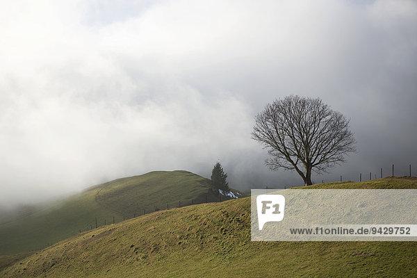 Nebelstimmung an einem Wintertag  Appenzell  Appenzell  Kanton Appenzell Innerrhoden  Schweiz