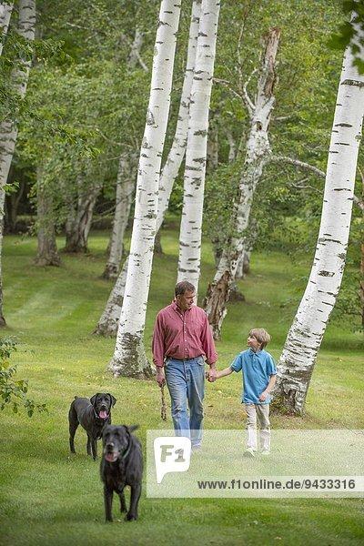 Vater und Sohn gehen mit zwei Hunden aus.