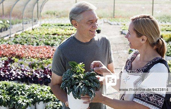 Gärtnerin berät Kundin zu Topfpflanzen im Gärtnerei-Polytunnel