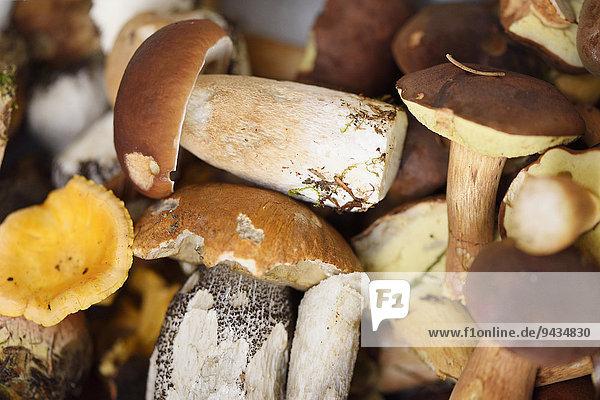 Gesammelte Pilze im Herbst