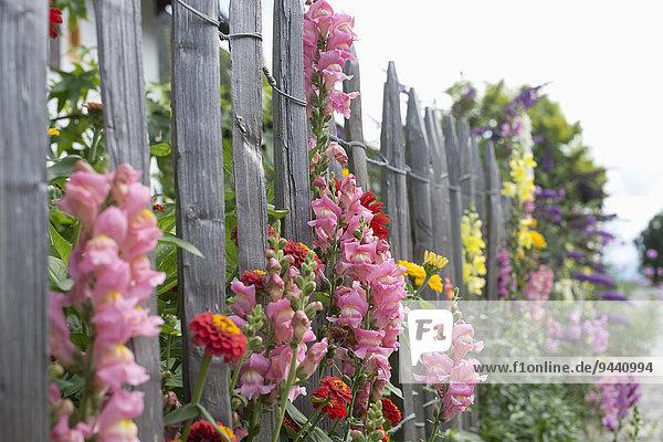 Gartenzaun mit Sommerblumen