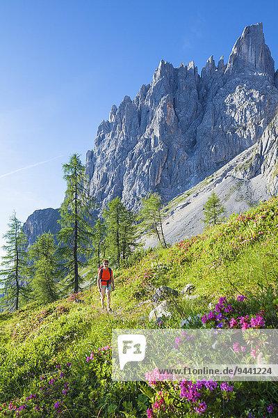 Frau wandert am Hochkönigsteig  Berchtesgadener Alpen  Österrreich