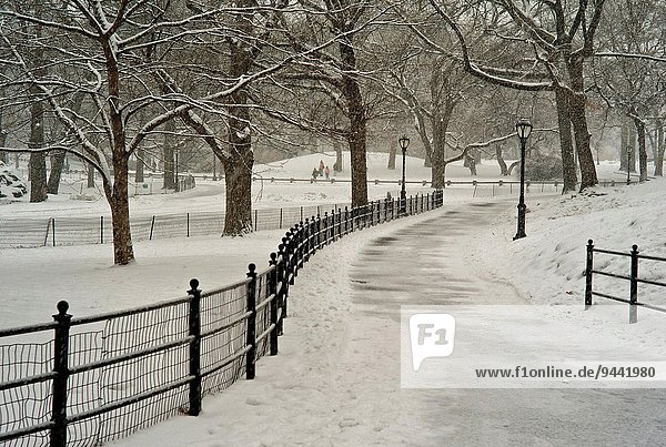 Snow blizzard in Central Park. Manhattan. New York City.