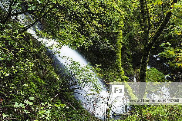 Wasserfall Shepperd's Dell Falls in der Columbia River Gorge Schlucht  Portland  Oregon  USA  Nordamerika
