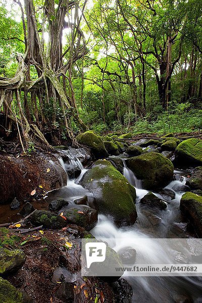 Judd Trail  Nuuanu Valley  Honolulu  Oahu  Hawaii