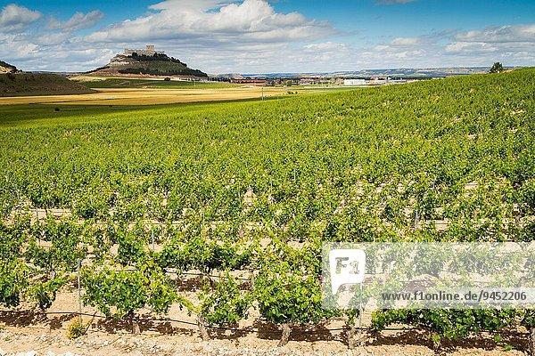 Europa Wein Geographie Spanien Valladolid Weinberg