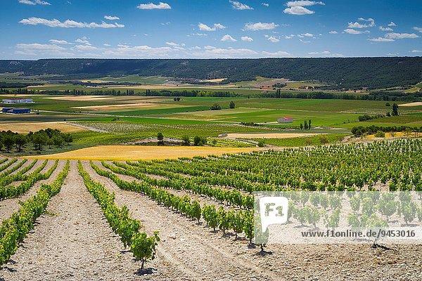 Europa Wein Dorf Geographie Spanien Valladolid Weinberg