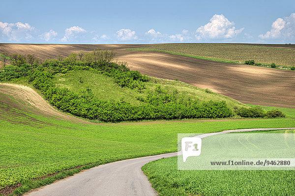 Naturdenkmal Wiesen von Hovorany  Hovorany  Okres Hodonín  Jihomoravsky Kraj  Südmähren  Tschechien  Europa