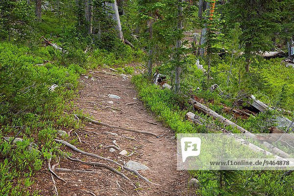 Lady of the Lake Trail  Gallatin National Forest  Montana.