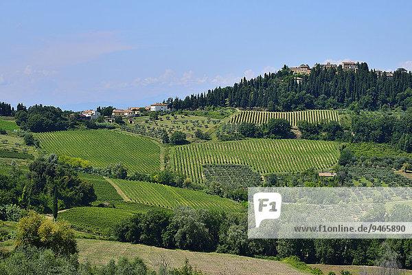 Landschaft mit Weingärten im Anbaugebiet des Chianti Classico  Lecchi in Chianti  Provinz Siena  Toskana  Italien  Europa