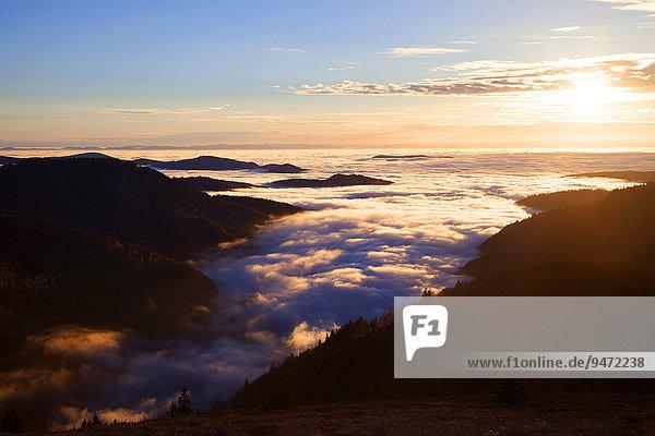 Ausblick vom Feldberg über das Rheintal zu den Vogesen  Inversionswetterlage  Schwarzwald  Baden-Württemberg  Deutschland  Europa