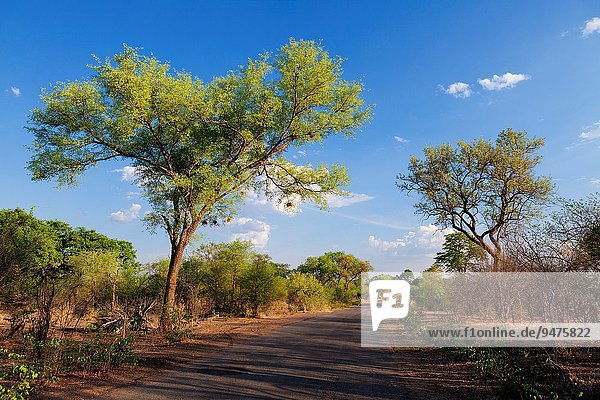 Fotografie Landschaft Fernverkehrsstraße Asphalt Zimbabwe