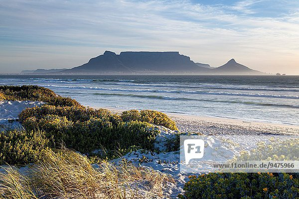 Landscape photo of vegetated dunes in afternoon light with table mountain in the background. Blouberg strand  Cape Town  South africa.