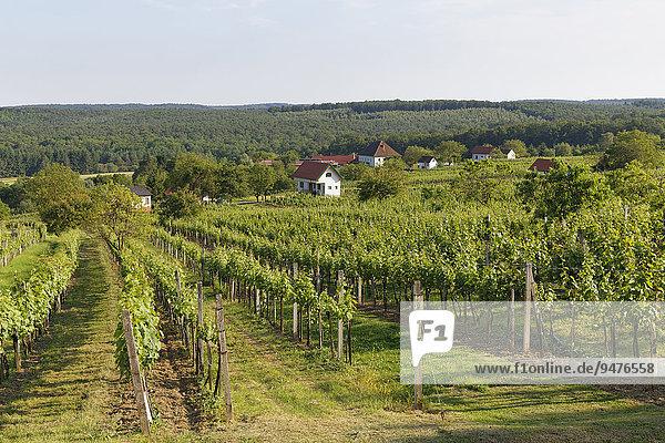 Weinberg Csaterberg  Kohfidisch  Südburgenland  Burgenland  Österreich  Europa