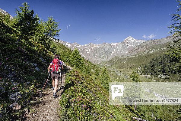 Bergsteiger beim Aufstieg auf den Kortscher Schafsberg in Schnals  hier im Lagauntal  hinten die Saldurspitz  Schnalstal  Meraner Land  Meran und Umgebung  Südtirol  Trentino-Südtirol  Italien  Europa