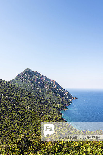 Forested mountains on the coast  Gulf of Porto  Corsica  France  Europe