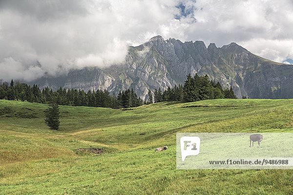 Alpstein im Appenzell  St. Gallen  Schweiz  Europa