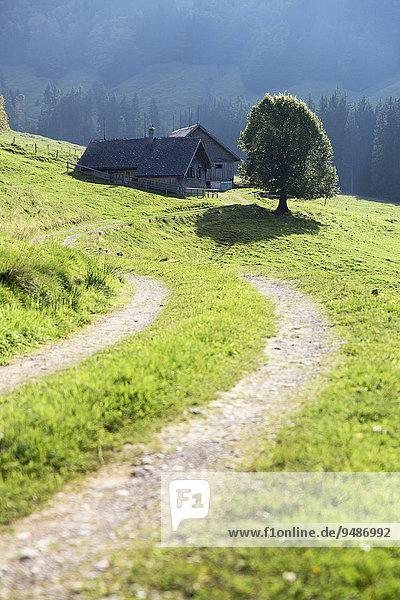 Gross Euchst Alm  Kronberg  Alpstein  Appenzell  Schweiz  Europa