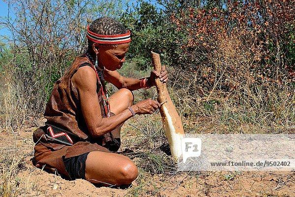 Frau Strauch Pflanze durstig Kalahari Afrika Botswana Trockenzeit abbröckeln Wurzel