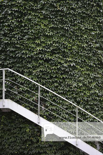 Deutschland  München  Außenmauer bewachsen mit Wildwein und weißer Treppe Deutschland, München, Außenmauer bewachsen mit Wildwein und weißer Treppe