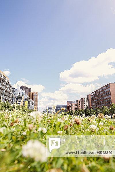 Deutschland  Berlin  Sommerwiese am Potsdamer Platz Deutschland, Berlin, Sommerwiese am Potsdamer Platz