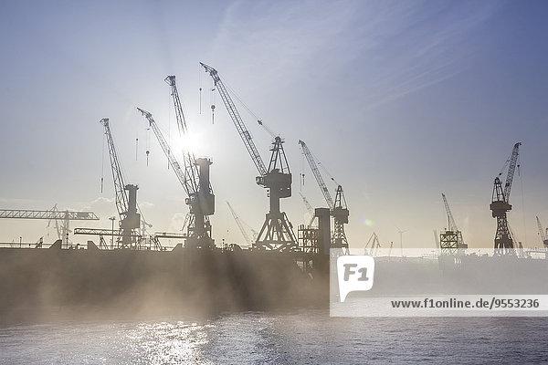 Deutschland  Hamburg  Silhouette der Kraniche im Nebel über der Elbe