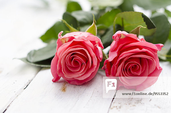 Zwei Rosenblüten auf weißem Holz