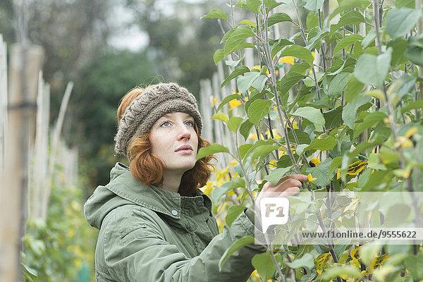 Porträt einer Gärtnerin bei der Beobachtung der Pflanze