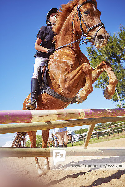 Mädchen auf Pferd überquert Hindernis auf Kurs
