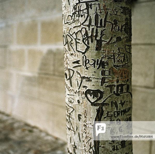 Graffiti auf einer Birke