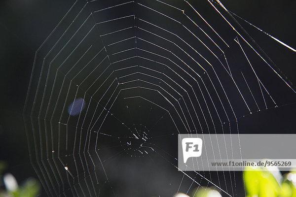 Spinnwebe,Close-up,Spinne