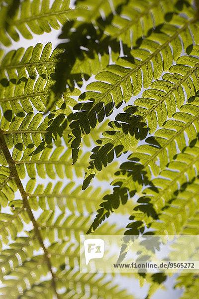Vollbildaufnahme der Blätter
